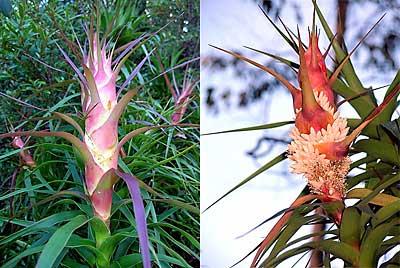 Mt Wellington blooms
