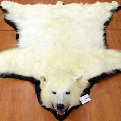 bear11-140.jpg